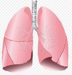 Lung Diseases Linked to Hormones in Women