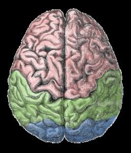 Hysterectomy and brain health