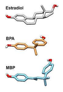 BPA, MBP, estradiol