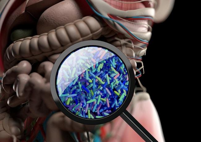 hormones gut bacteria