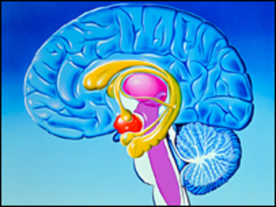 thiamine and the limbic system