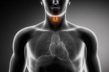 thyroid and cardiovascular function