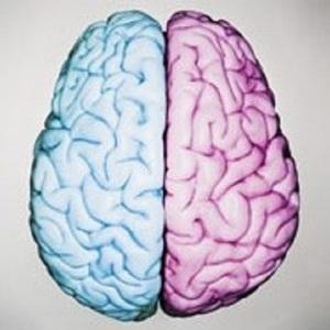 Transgender brain