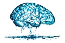 leaky gut leaky brain