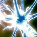 orexin hypocretin neurons brain energy