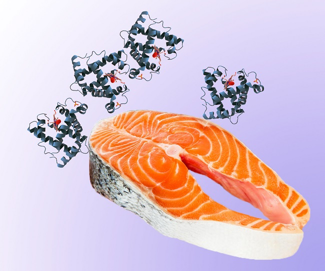 Salmon-and-protein-molecule