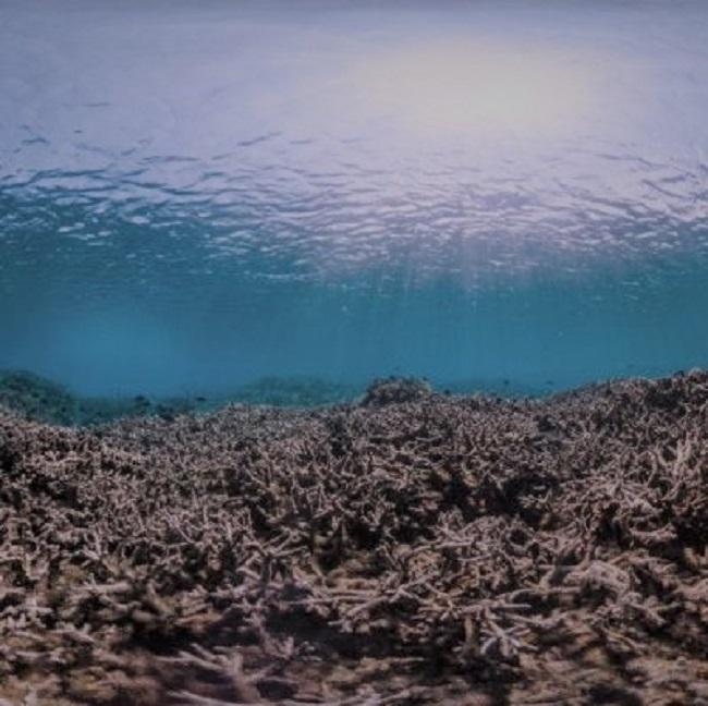 coral reefs, EMR, vitamin c