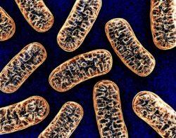 happy mitochondria