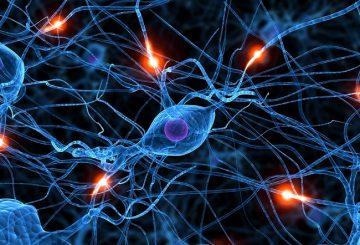 neuropathy thiamine biotin MS