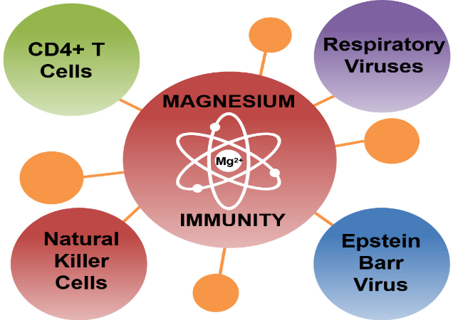 Magnesium and immune function