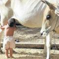 Milk as nutrition