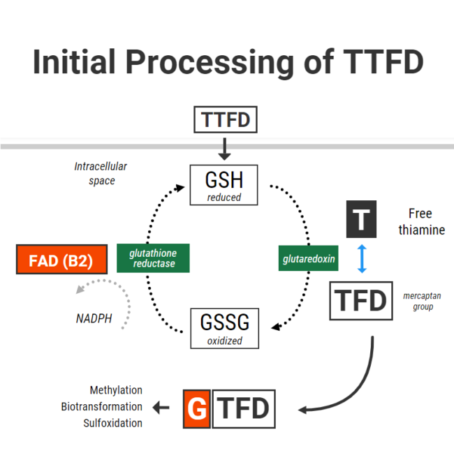 TTFD and Glutathione