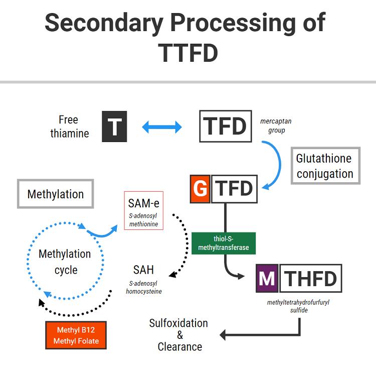TTFD and methylation
