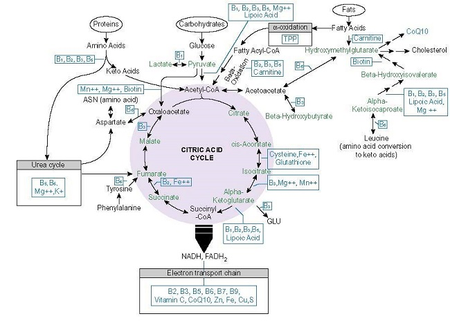 Mitochondrial nutrients