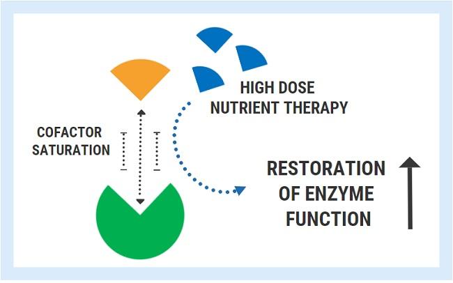 nutrient cofactors enzymes