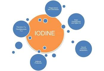 roles of iodine in the body